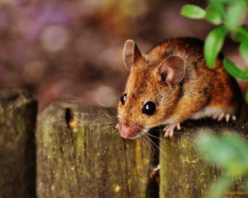 Spenden Lebensfreude nicht nur für Tierliebhaber: süße Mäuse © 2016 Alexas Fotos/pixabay.com | prepon.de